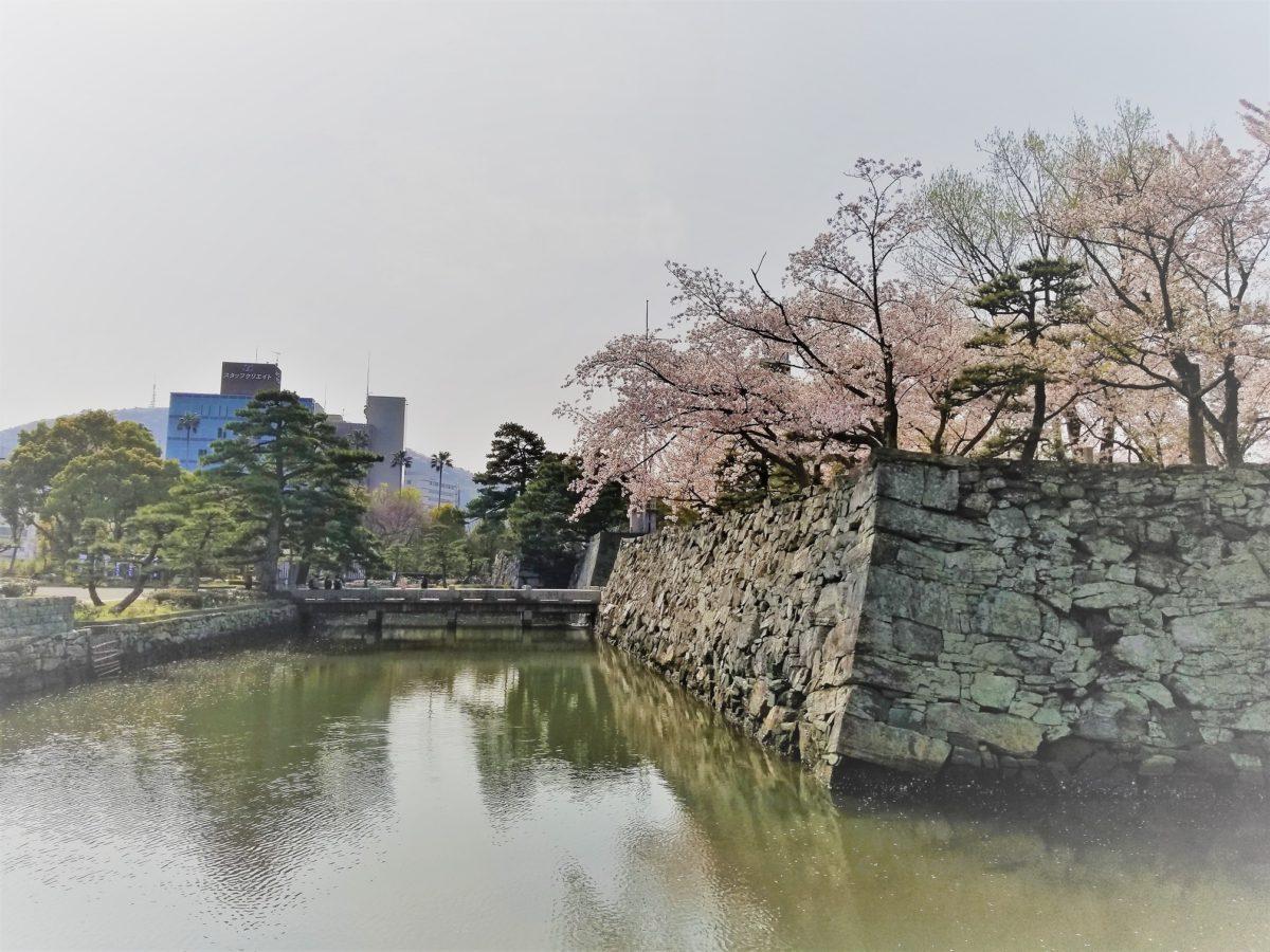 徳島城公園の桜が満開でした。
